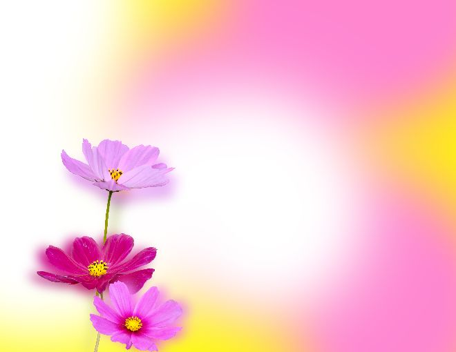 Lovely Flowers Ppt Background Best Powerpoint Templates And